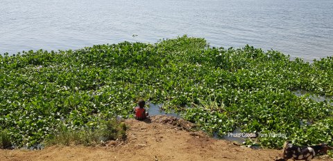 Child on the banks of the Nile, Kamuli.